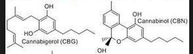 CBG-and-CBN = CBG Cannabigerinol
