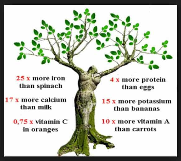 Moringa Products In Phoenix