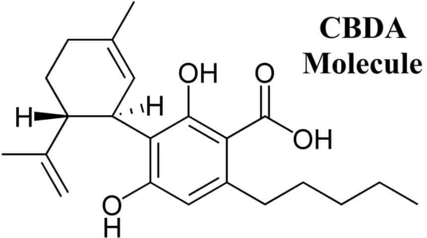 cbda-molecule_orig