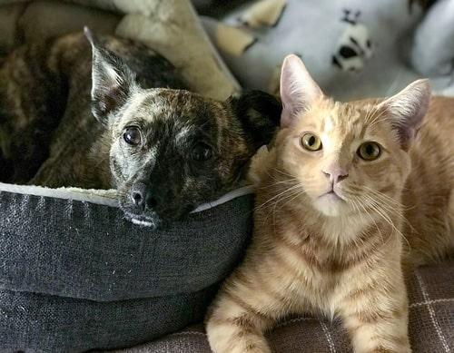 CBD-FOR-PETS---PET-CBD---CBD-FOR-DOGS---CBD-FOR-CATS---PET-TINCTURE